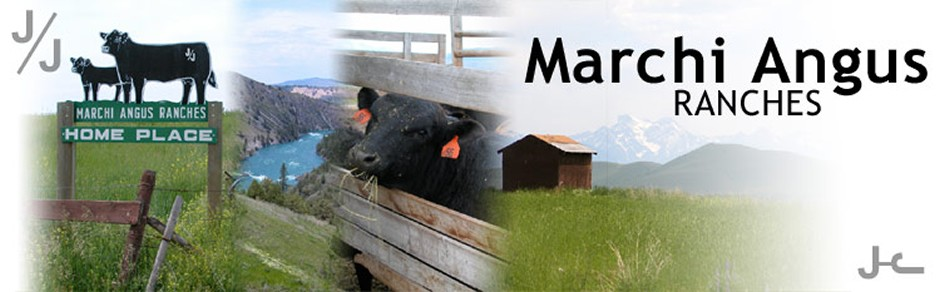 Marchi Angus Ranches